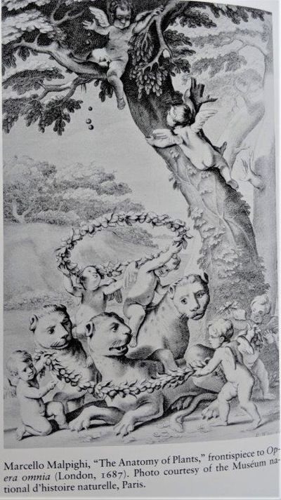 Image for Nature's Second Kingdom, Exploration of Vegetality in the Eighteenth Century. Translated by Arthur Goldhammer.