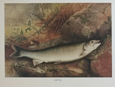 Game Fishes of the United States, Kilbourne, Samuel A. and George Brown Goode
