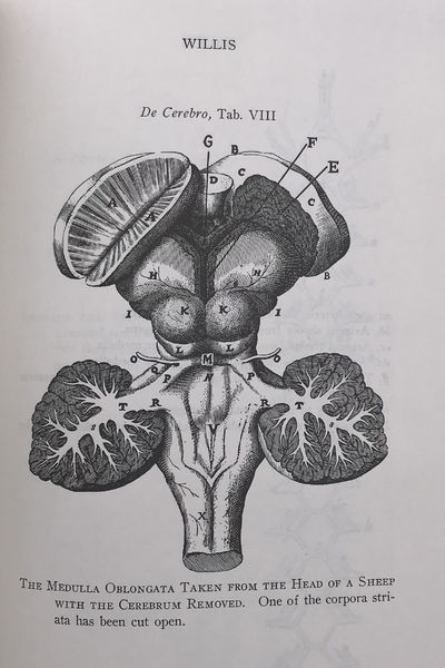 Image for Three Transactions on the Cerebrum; a posthumous work by Emanuel Swedenborg, now first translated and edited from a photostat copy of the original manuscript preserved in the Royal Swedish Academy of Sciences by Alfred Action. Volume I; Volume II, The Dura Mater.