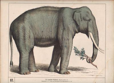Image for Naturhistorischer Atlas zum Gebrauch beim Unterricht. Säugethiere. 30  Tafeln nach der Natur und nach ausgestopften Exemplaren gezeichnet.