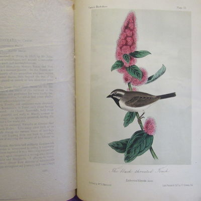 Illustrations of the Birds of California, Texas, Oregon, British and  Russian America.  Fascicule 5 comprising text pages129-158 & plates 21-25  as issued in original wraps.