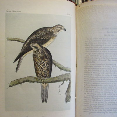 Image for Illustrations of the Birds of California, Texas, Oregon, British and  Russian America.  Fascicule 9 comprising text pages 241-270 & plates 41-45  as issued in original wraps.