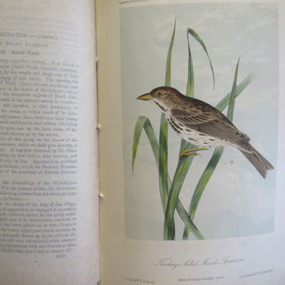 Image for Illustrations of the Birds of California, Texas, Oregon, British and  Russian America.  Fascicule 8 comprising text pages 213-240 & plates 36-40  as issued in original wraps.