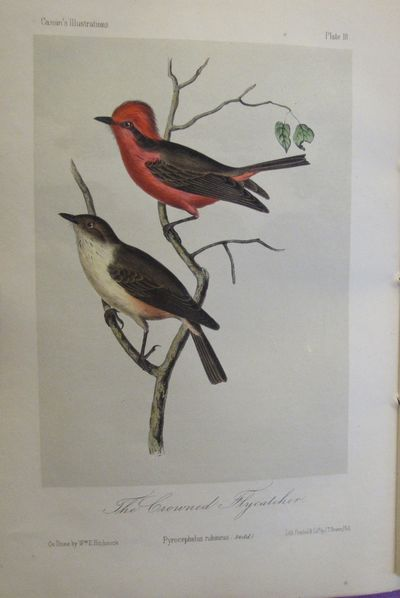 Image for Illustrations of the Birds of California, Texas, Oregon, British and  Russian America.  Fascicule 4.