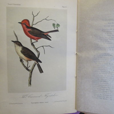 Image for Illustrations of the Birds of California, Texas, Oregon, British and  Russian America.  Fascicule 4: text pages 97-128, plates 16-20 as issued  in original wraps.