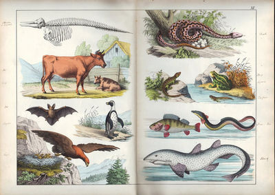 Image for The Instructive Picture Book, or Progressive Lessons from the Natural  History of Animals and Plants