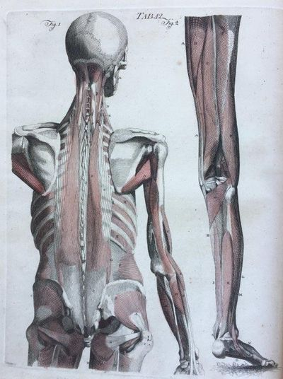 A system of the anatomy of the human body: illustrated by upwards of two hundred tables, taken partly from the most celebrated authors, and partly from nature. Third edition, considerably enlarged and improved., FYFE, Andrew (1754-1824), the elder.