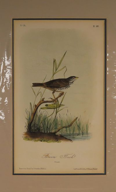 Image for Brown Finch No. 33, PI.187