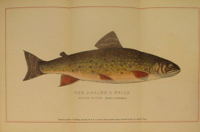 Image for Brook Trout Fishing. An Account of a Trip of the Oquossoc Angling Association to Northern Maine in June, 1869. About Brook Trout