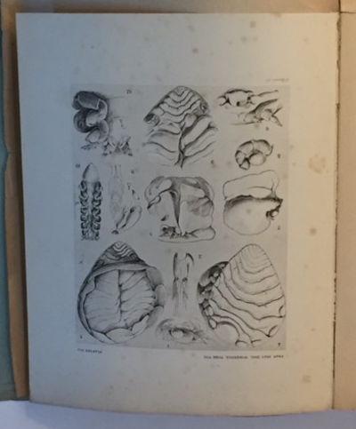 Contribution A L'etude Des Epicarides Les Bopyridae (Trauvaus de la Station Zoologique de Wimereux sous la Direction de Alfred Giard), Bonnier, Jules